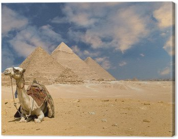 Wielbłąd piramidy