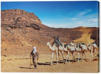 Wielbłądy karawana w Saharze, Algieria