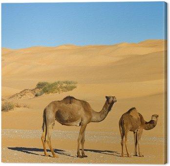 Obraz na Płótnie Wielbłądy na pustyni - Awbari Sand Sea, Sahara, Libia