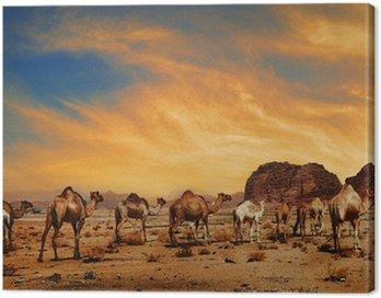 Obraz na Płótnie Wielbłądy w Wadi Rum