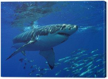 Obraz na Płótnie Wielki biały rekin