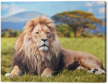 Obraz na Płótnie Wielki lew leżący na sawannie trawie. Kenia, Afryka