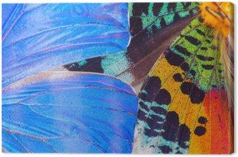 Obraz na Płótnie Wielobarwne motyle skrzydła