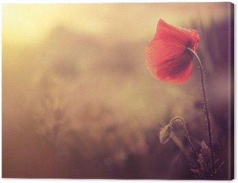 Obraz na Płótnie Wild Flower Poppy