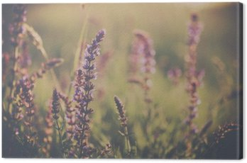 Obraz na Płótnie Wild flower