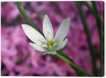Obraz na Płótnie Wiosenne kwiaty w ogrodzie.