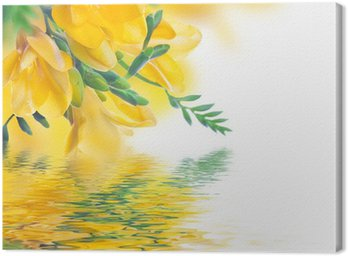 Obraz na Płótnie Wiosna żółty pierwiosnek i wody, kwiatów w tle