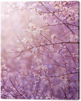 Wiśniowe drzewo kwiat