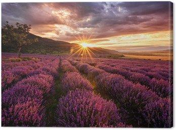 Obraz na Płótnie Wspaniały krajobraz z lawendowego pola na wschód słońca
