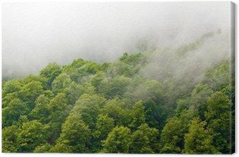 Obraz na Płótnie Wspaniały zielony las we mgle po deszczu