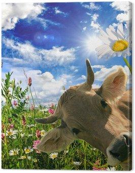 Obraz na Płótnie Wszystkiego najlepszego: Krowa daje kwiat :)