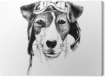 Wyciągnąć rękę przebrany pies lotnik