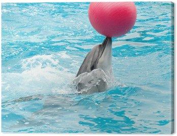 Obraz na Płótnie Wykonywanie delfina z czerwoną kulką