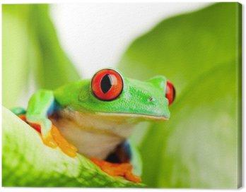 Obraz na Płótnie Żaba na liściu