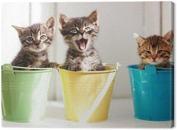 Obraz na Płótnie Zabawne kociaki
