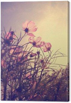Obraz na Płótnie Zabytkowe kosmos kwiaty w czasie zachodu słońca