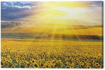 Obraz na Płótnie Zachód słońca nad pola