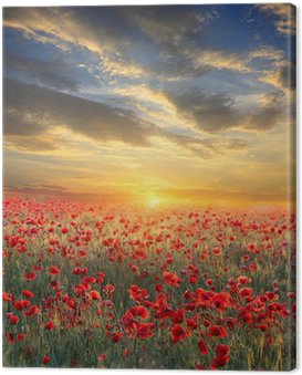 Obraz na Płótnie Zachód słońca nad pole maku