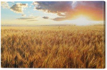 Obraz na Płótnie Zachód słońca nad pole pszenicy.