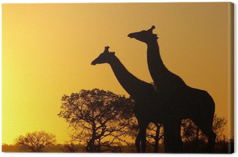 Obraz na Płótnie Zachód słońca w Afryce