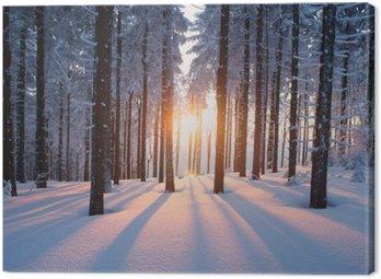 Obraz na Płótnie Zachód słońca w lesie w okresie zimowym