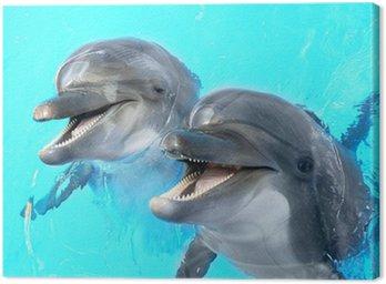 Obraz na Płótnie Zadowolony, uśmiechnięty piękne delfinów w niebieskiej wody w basenie ON