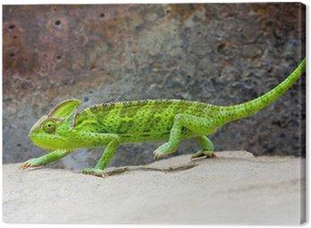 Obraz na Płótnie Zakryte Chameleon (Kameleon jemeński)