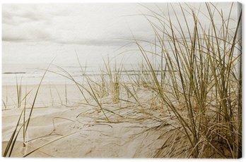 Zamknąć z wysokiej trawy na plaży podczas pochmurnego sezonie