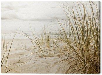 Obraz na Płótnie Zamknąć z wysokiej trawy na plaży podczas pochmurnego sezonie
