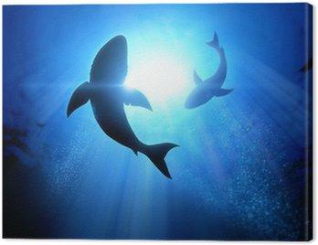 Obraz na Płótnie Żarłaczy białych