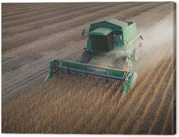 Obraz na Płótnie Zbiorów soi