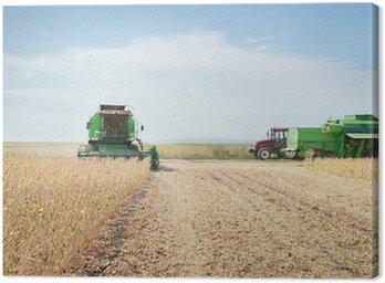 Obraz na Płótnie Zbioru ziarna soi