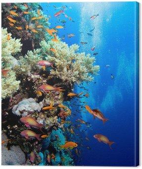 Obraz na Płótnie Zdjęcie kolonii koralowców