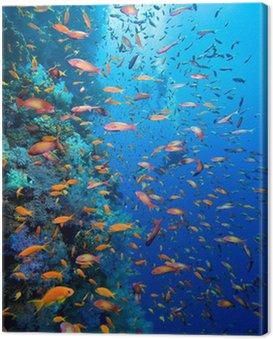 Zdjęcie z kolonii koralowców i nurków