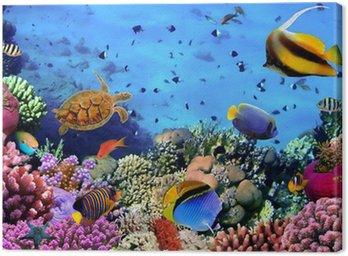 Obraz na Płótnie Zdjęcie z koralowców kolonii na Rafa, Egipt