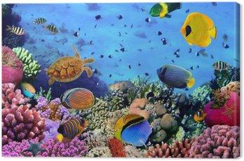Obraz na Płótnie Zdjęcie z koralowców kolonii