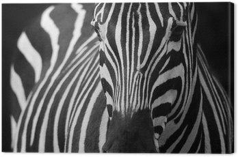 Obraz na Płótnie Zebra 2