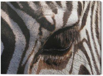 Obraz na Płótnie Zebra - zbliżenie na oko