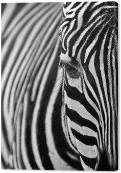 Obraz na Płótnie Zebra