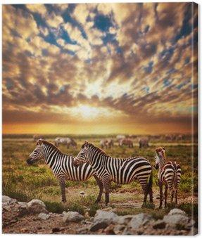 Zebry afrykańskiej sawanny stado na zachodzie słońca. safari w Serengeti