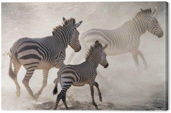 Obraz na Płótnie Zebry na biegu