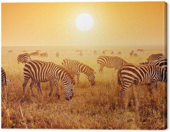 Obraz na Płótnie Zebry stado na afrykańskiej sawanny o zachodzie słońca.