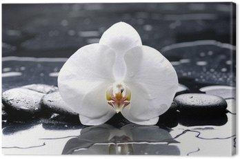 Obraz na Płótnie Zen lub spa still life na czarnym z białym storczyków