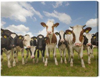 Obraz na Płótnie Zespół holenderskich krów