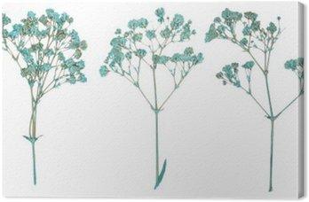 Obraz na Płótnie Zestaw dzikich wciśnięty suchych kwiatów