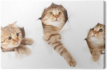 Obraz na Płótnie Zestaw jednego kota w bocznej papieru podarte izolowane otworu