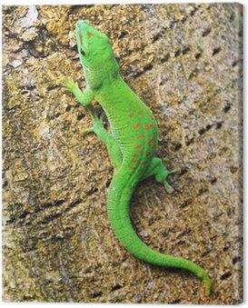 Obraz na Płótnie Zielona Madagaskar dzień gecko na palma