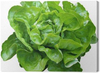 Obraz na Płótnie Zielona sałatka z naszych ogrodach