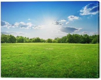 Obraz na Płótnie Zielona trawa i drzewa