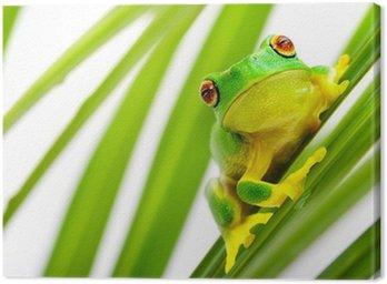 Obraz na Płótnie Zielona żaba drzewo na palmy